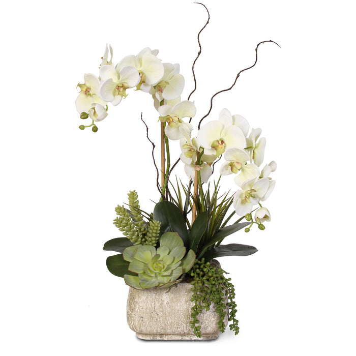 Real Touch Phalaenopsis Silk Orchid with Succulents in Stone Pot #25B