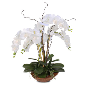 Real Touch Phalaenopsis Silk Orchid with Curly Willow in Natural Teak Wood Bowl #43