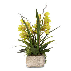 Alluring Green Real Touch Cymbidium Orchid & Artificial Succulents in a Textured Cement Pot #F-56G