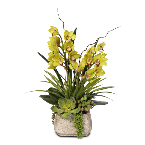Alluring Green Real Touch Cymbidium Orchid & Artificial Succulents in a Textured Cement Pot #56G