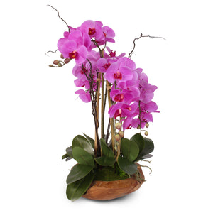 Real Touch 5-Stem Phalaenopsis Silk Orchids in a Natural Teakwood Bowl #59A
