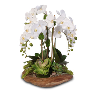 Real Touch 6-Stem Phalaenopsis Silk Orchids with Succulents in Natural Wood Bowl #F-59E