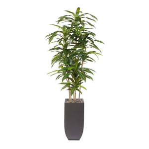 6' H Artificial Real Touch Dracaena Massangeana Tree with Rocks in a Metal Planter #91