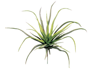 "12.5"" Medium Tillandsia Spray #AA6752"