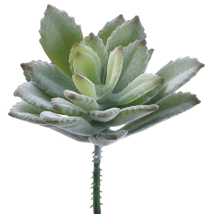 "3"" Baby Agave Pick #CA8017-GR"