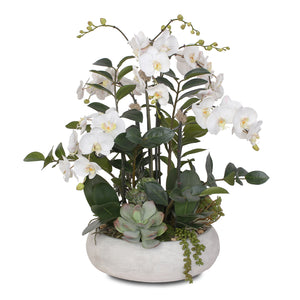 Stunning Two Tone White Silk Phalaenopsis Orchids with Succulents and Silk ZZ Plant in Wash Stone Round Pot #F-106