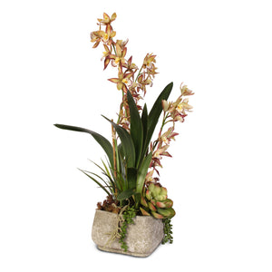 Dusty Cymbidium Orchid and Succulents with Pebbles in a Cement Pot #F-10E