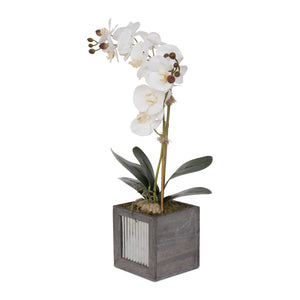 F-114 Modern Simplistic Display of Phalaenopsis Orchids and Greenery in Grey Wooden Box