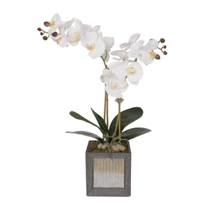 Modern Simplistic Display of Phalaenopsis Orchids and Greenery in Grey Wooden Box #F-114