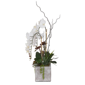 White Orchids With Succulents in Square Wash Stone Pot #F-117