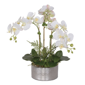 Phalaenopsis Orchid in Silver Pot #F-119
