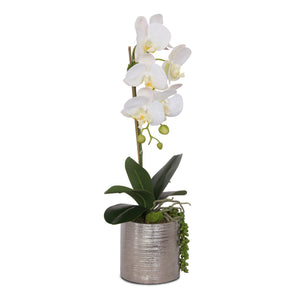 Jenny Silks Silk Real Touch White Phalaenopsis Orchid with Succulent Flower Arrangement in Round Cylinder Silver Etched Ceramic Pot #F-122