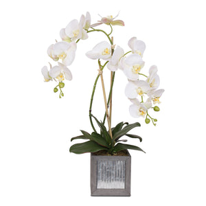 Orchids in Gray Wood Cube Metal Pot# F-124