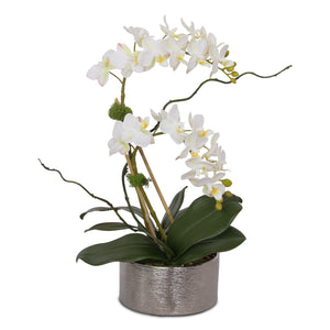 White Phalaenopsis Orchids in Round Silver Pot # F-126