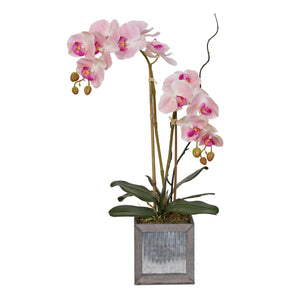 Jenny Silks Real Touch Pink Phalaenopsis Orchids  with Curly Willow Flower Arrangement in Cube Metal and Gray Wood Pot #F-131
