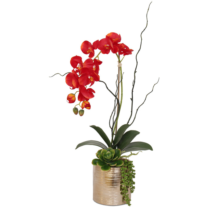 Jenny Silks Real Touch Red Phalaenopsis Orchid, Succulent and Curly Willow Flower Arrangement in Round Cylinder Gold Etched Ceramic Pot #F-140