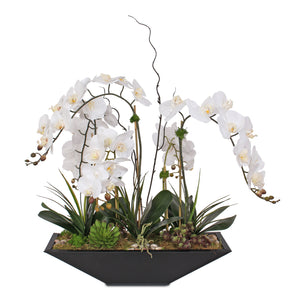 Modern White Orchids 7 Stems with Succulent, Grass & Rocks in Metal Pot #F-144