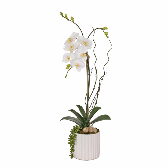 Jenny Silks Silk Cream White Phalaenopsis Orchid with Buds, Real Touch Orchid Leaf, Succulent, Curly Willow Flower Arrangement in Cream White Round Ribbed Cylinder Ceramic Pot #F-146