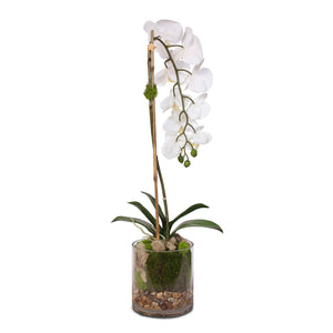 Real Touch White Phalaenopsis Orchid and leaf in a Sleek Glass Vase #F-24