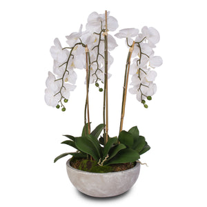 Silk White Phalaenopsis Orchids and Succulents in a Modern Stone Bowl #F-29