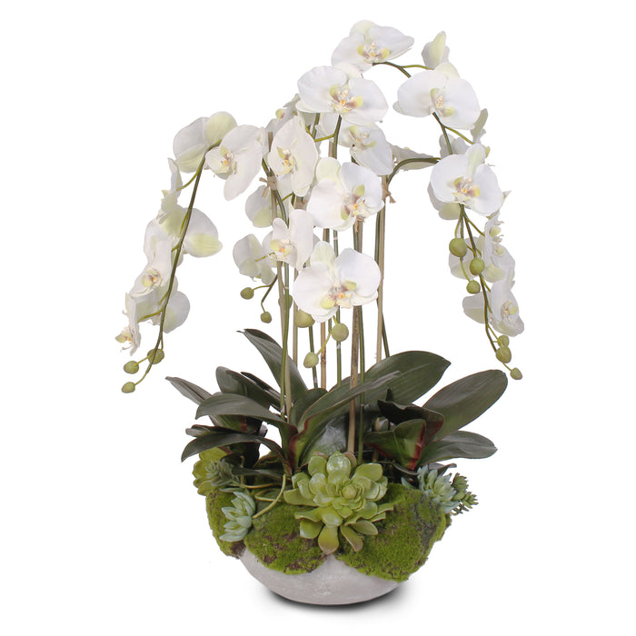 Silk White Orchids with Faux Moss and Succulents in a Modern Stone Bowl  #F-30
