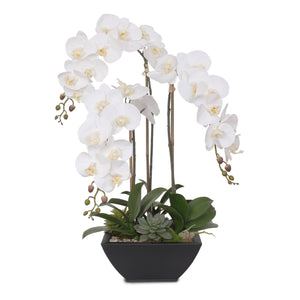 Real Touch White Orchids and Leaves with Succulents in Black Metal Zinc Pot #F-35