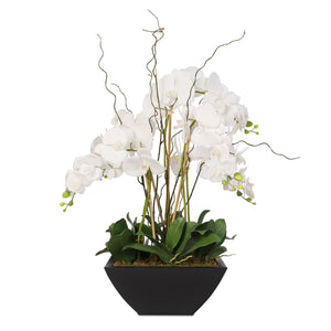 Real Touch White Phalaenopsis Orchids and Leaves in Black Metal Zinc Pot #F-37