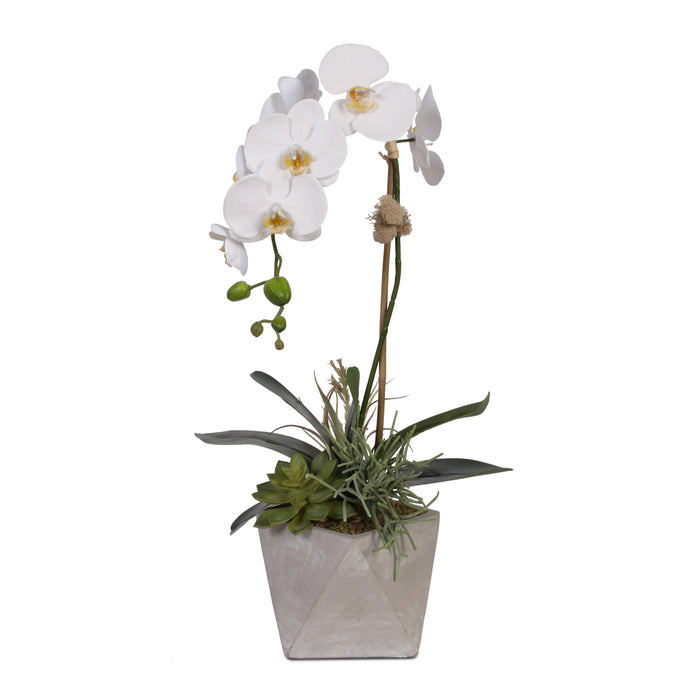 Real Touch White Orchid with Succulents in Geometric Stone Pot #F-39