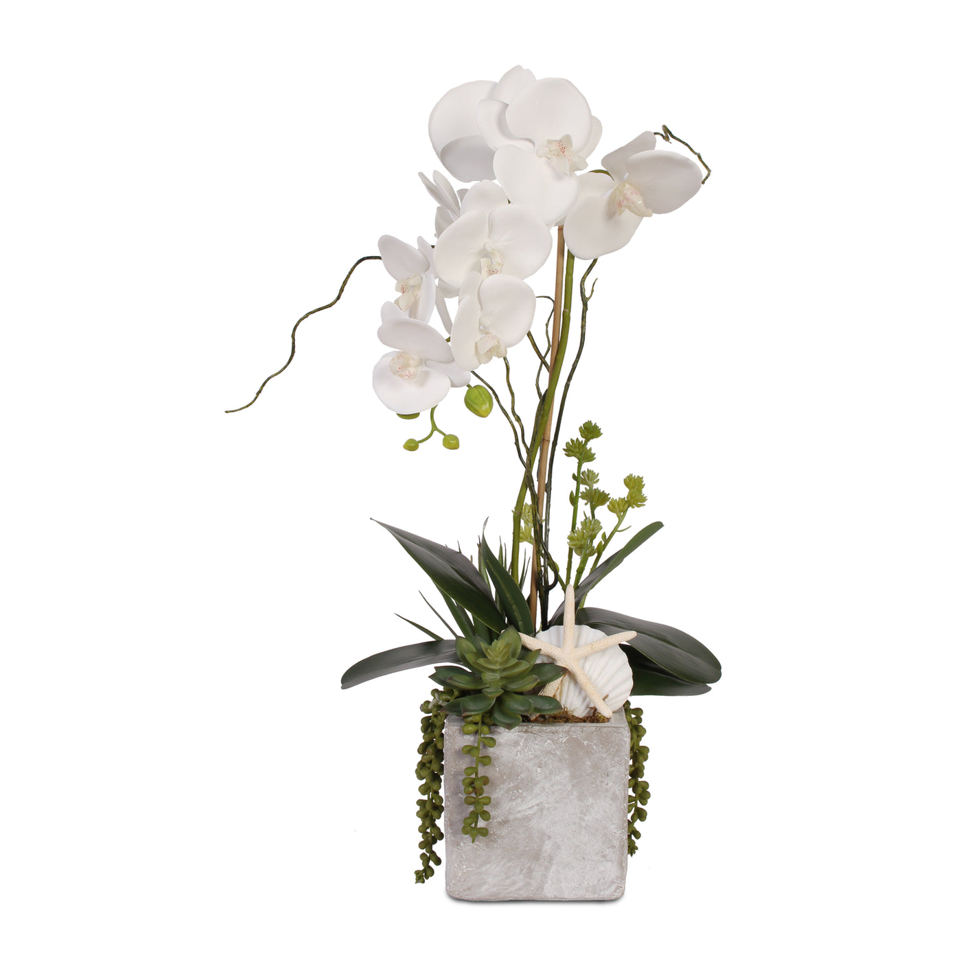 Real Touch White Orchid With Seashell Succulent In Stone Wash Pot F Jenny Silks