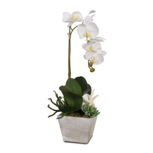 Real Touch White Orchid with Seashells and Succulents in White Wash Wood Pot #F-43