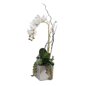 Real Touch White Phalaenopsis Orchid with Succulents in Silver Ceramic Pot #F-44