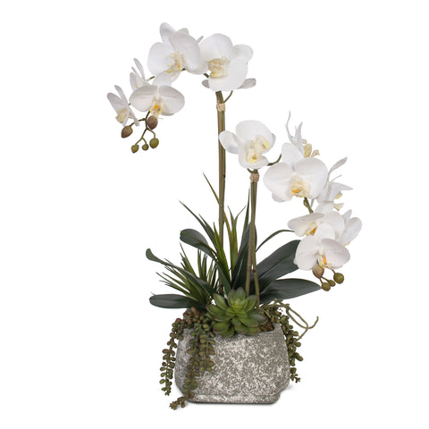 Real Touch Phalaenopsis Orchids  with Succulents in Concrete Pot #F-47