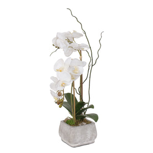 Real Touch White Phalaenopsis Orchids in Stone Wash Pot #F-51