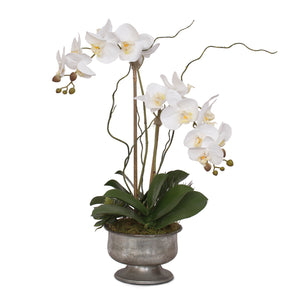 White Phalaenopsis Orchid with Succulent in Silver Aged Metal Pot #F-71