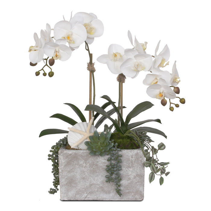 Real Touch Cream White Phalaenopsis Orchid with Seashells in Stone Wash Pot #F-72