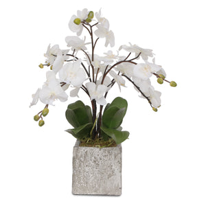 "Silk White ""Real Touch"" Orchids in a Modern Square Concrete Pot #F-82"