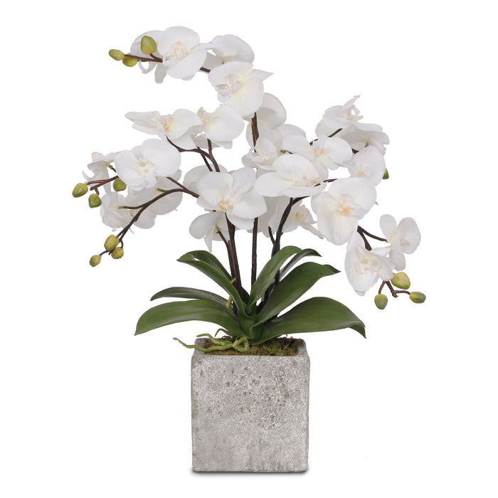 Silk White Phalaenopsis Orchids in a Modern Square Concrete Pot #F-82