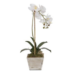 Real Touch White Orchid in Washed Wooden Pot #F-83