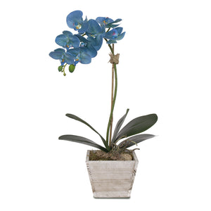 F-96 Real Touch Blue Silk Phalaenopsis Orchid in White Wash Wood Planter