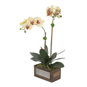 F-98 Yellow Burgundy Silk Phalaenopsis Orchids and Leaves in Metal Wood Pot