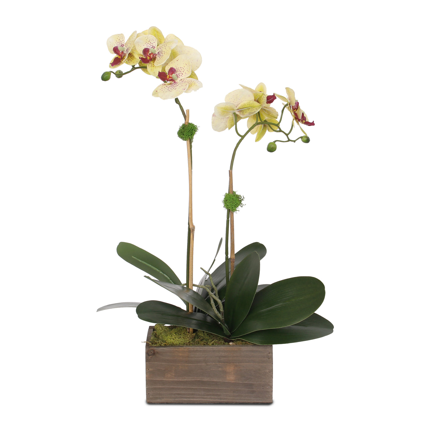 F 98 Yellow Burgundy Silk Phalaenopsis Orchids And Leaves In Metal