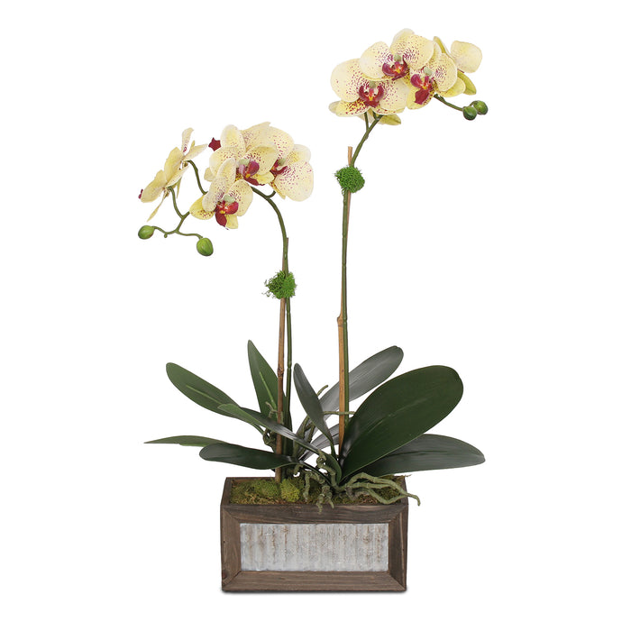 Yellow Burgundy Silk Phalaenopsis Orchids and Leaves in Metal Wood Pot #F-98