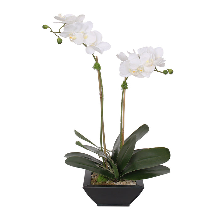 Real Touch White Silk Phalaenopsis Orchids and Leaves with Reindeer Moss in Black Metal Zinc Pot #F-99
