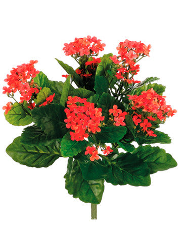 Kalanchoe Bush (6 Stems Total) #FBK107-FL