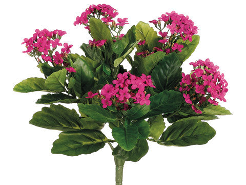 Kalanchoe Bush (6 Stems Total) #FBK107-FU