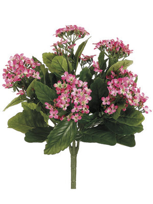 Kalanchoe Bush (6 Stems Total) #FBK107-PK~TT