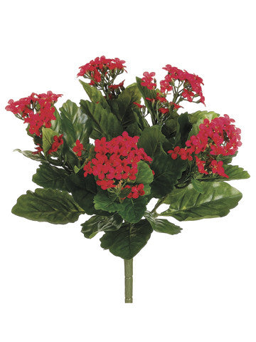 Kalanchoe Bush (6 Stems Total) #FBK107-RE