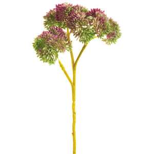 "8"" Sedum Pick Bundle x3 #FSS230-MV~GR"