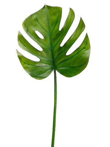 Split Philodendron Leaf Stem (6 Stems Total) #HSL419-GR