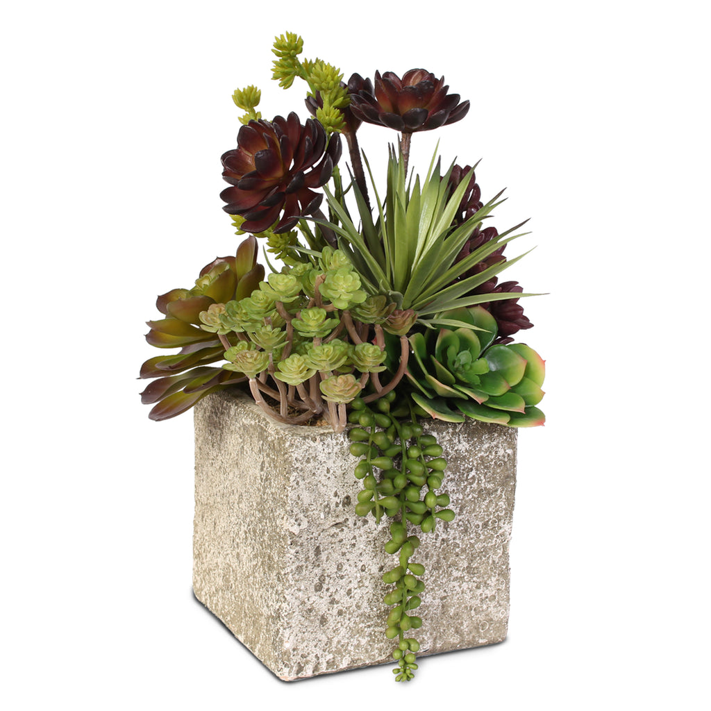 Succulent, Hen & Chicks Coastal Cottage Arrangement in Cement Pot #JS03